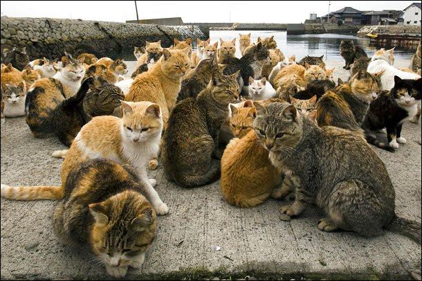 Dans quel océan se situe l'île aux chats ?