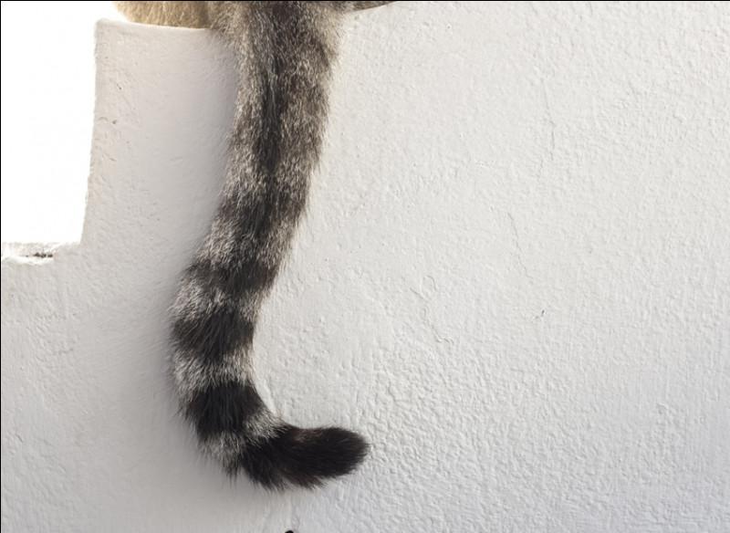 Retrouvez les queues de chat.
