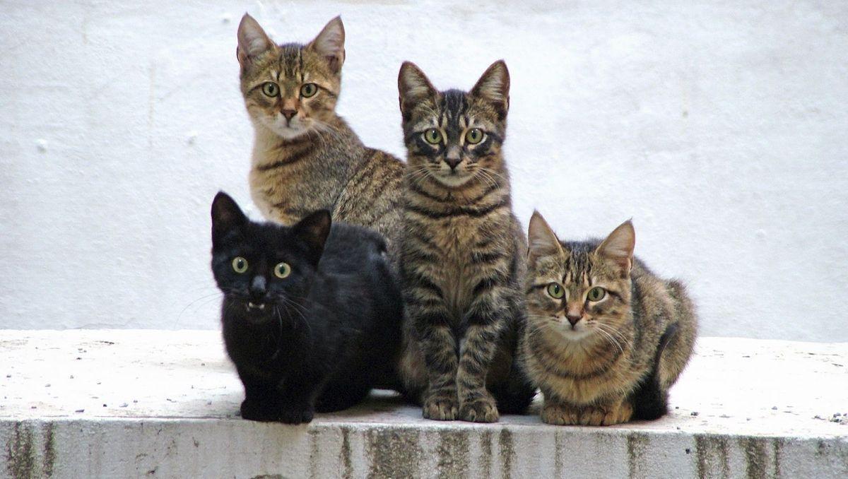 Le chat et la culture générale