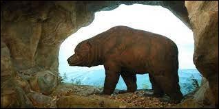 Tu partais faire un exposé avec tes amis dans une grotte à côté de chez toi. Et d'un seul coup un ours surgit. Que fais-tu ?