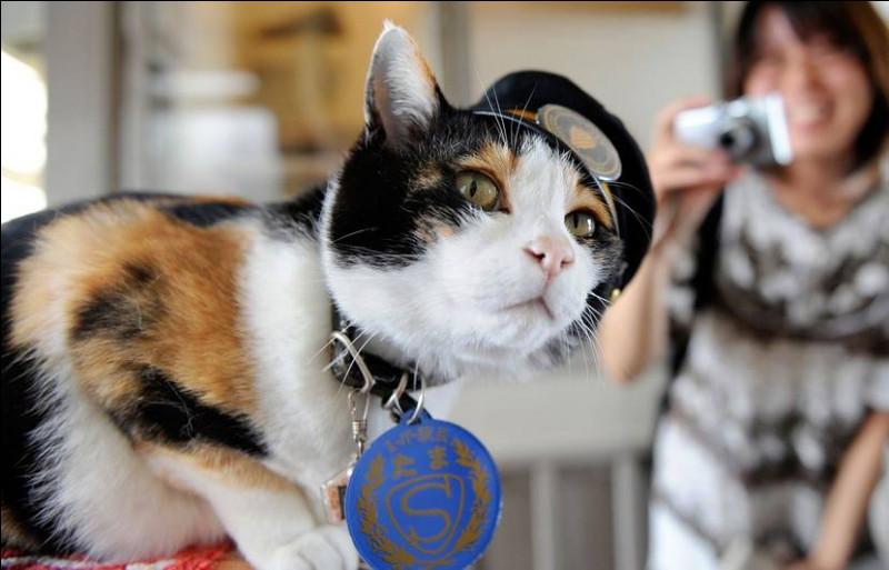 C'est une chatte japonaise célèbre et cheffe de gare, nommée pour attirer les voyageurs et éviter la fermeture de Kishi.