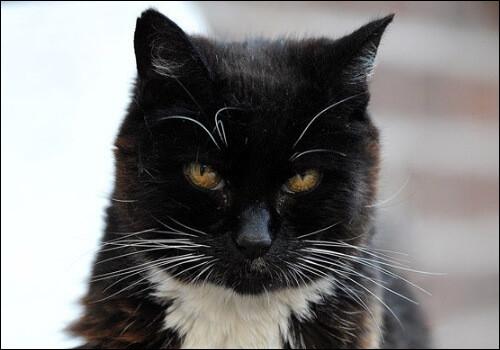 Il bat les records de vieillesse des chats en étant mort à 38 ans.