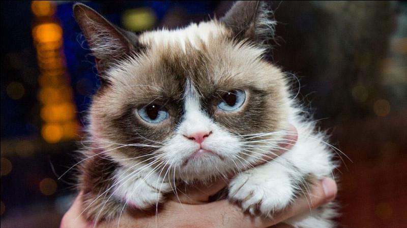 Cette chatte était célèbre sur les réseaux sociaux grâce à sa tête de grincheuse.