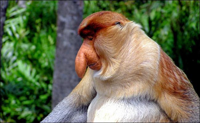 Ce cousin de Rastapopulos a un drôle de nez, qu'on retrouve dans son nom.