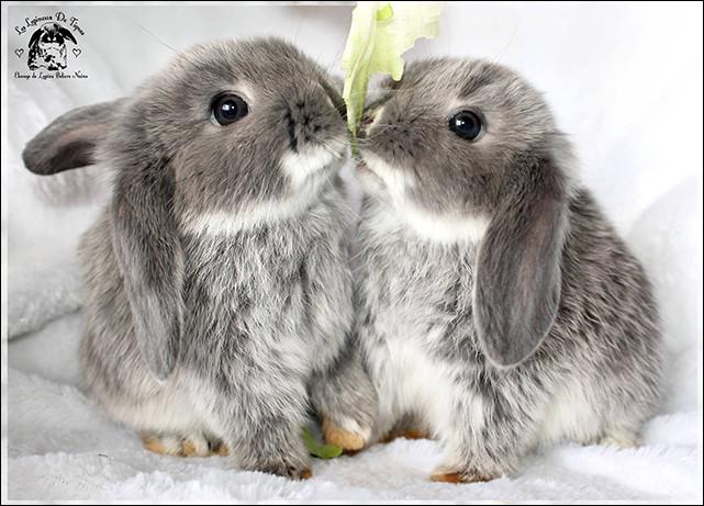 Quel est le nom d'un éleveur des lapins ?