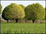 Pourquoi taille-t-on les arbres ?