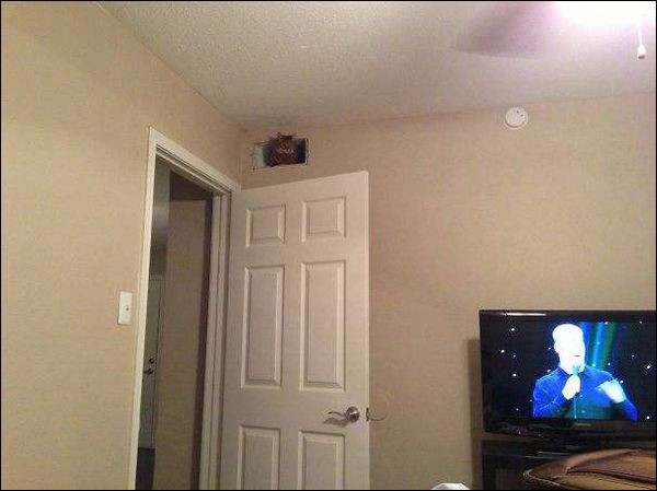 Dans quel coin de la photo se trouve le chat ?Indice : il est brun.