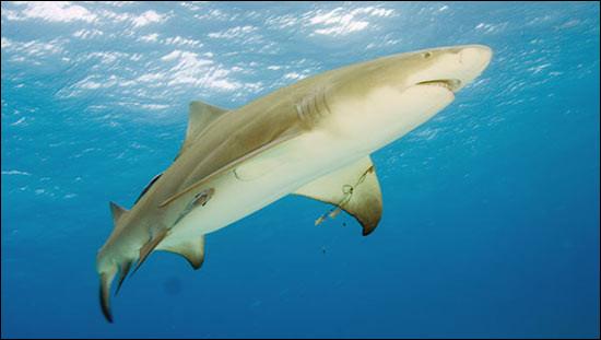 Cet animal marin est un :