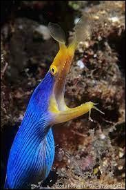 Comment se nomme ce poisson ?