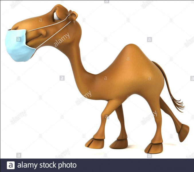 """Qui a réalisé le film """"Il est plus facile pour un chameau..."""" ?"""