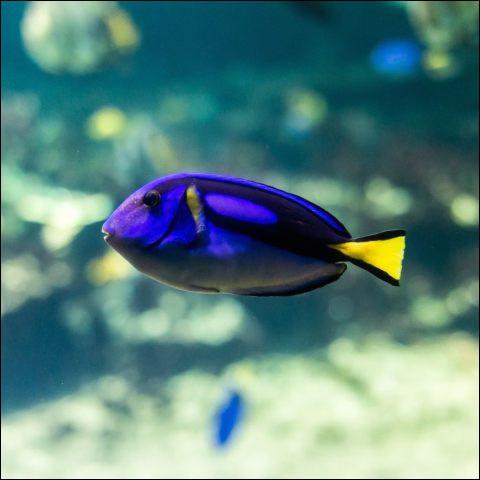 Quiz - les animaux marins