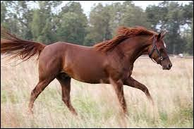Quel adjectif qualifie un cheval possédant une robe et des crins dans les tons fauve, sans aucun poil noir ?