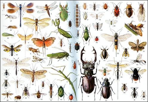 Par quel mot désigne-t-on la phobie des insectes ?