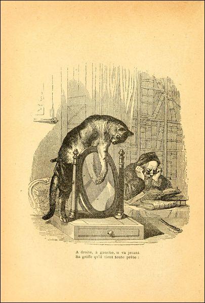 """Qui est l'auteur de la fable """"Le Chat et le miroir"""" ?"""