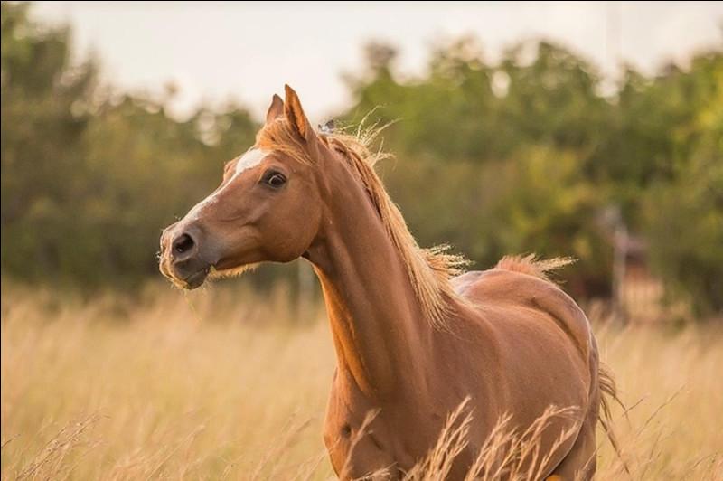 L'espérance de vie d'un cheval est de 25 à 30 ans.
