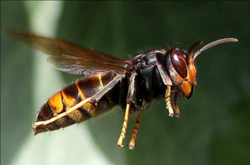 Si vous savez le nom de cet horrible insecte, vous connaissez le continent !