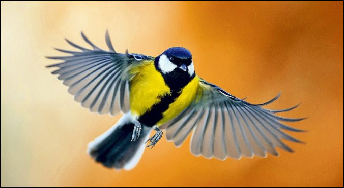 On se servait d'excréments d'oiseaux spéciaux afin d'en faire de l'engrais. Comment étaient-ils appelés ?