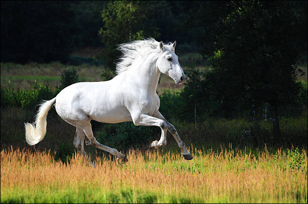 Ce cheval majestueux a une robe...