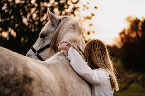 Les chevaux portent des robes !