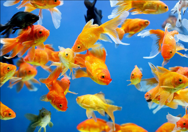 Où vivent les poissons sportifs ?