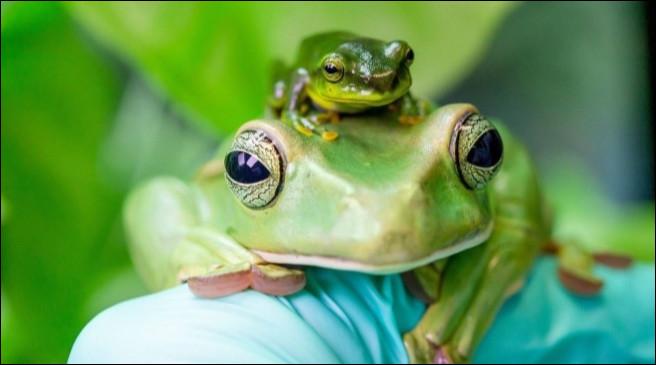 Quelle syllabe rend les grenouilles intelligentes ?