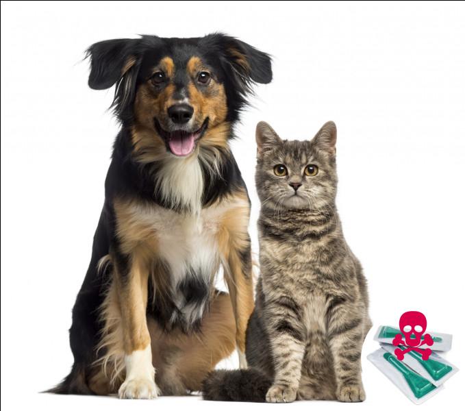 Comment faire aboyer un chat ?