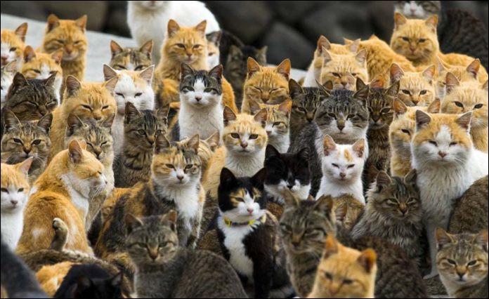 À quel pays appartiennent les îles aux chats du Pacifique ?