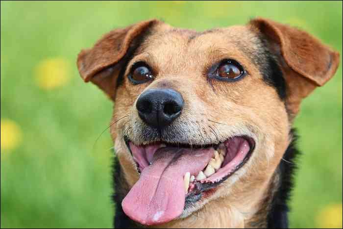Le saviez-vous ? Il n'y a pas que les chiens qui halètent. Beaucoup de mammifères le font aussi, mais pourquoi ?