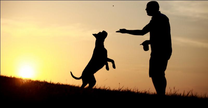 Que pense le chien quand il se jette sur son maître ?