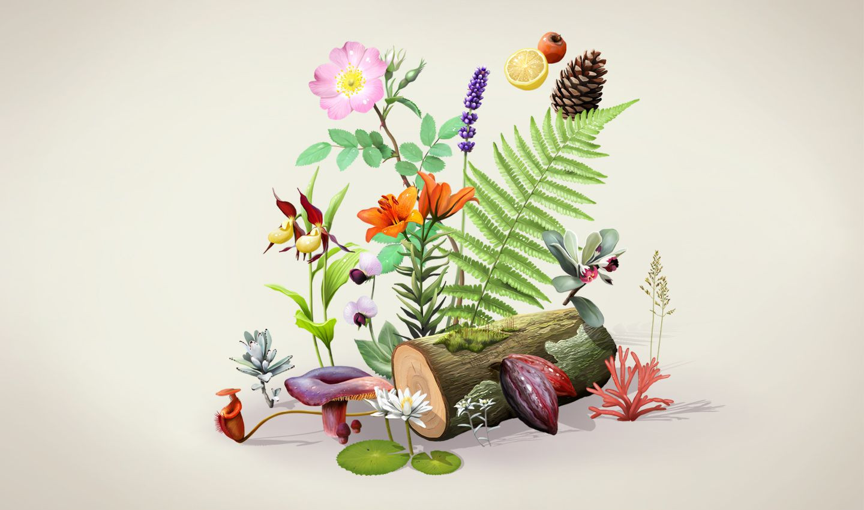 Botanique - Arbres caducs - (1)