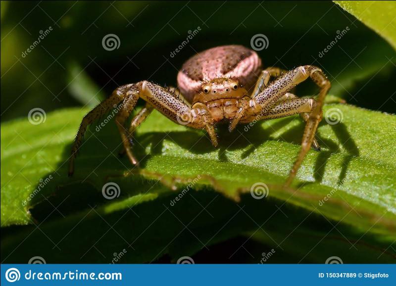 A ~ Araignée : de quelle famille cet animal fait-il partie ?