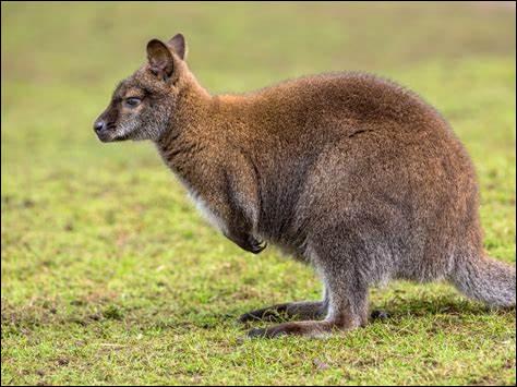 W ~ Wallaby : il existe un parc d'attractions qui porte presque le même nom.