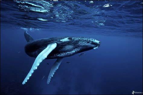 B ~ Baleine : et cet animal, dans quelle famille est-il ?