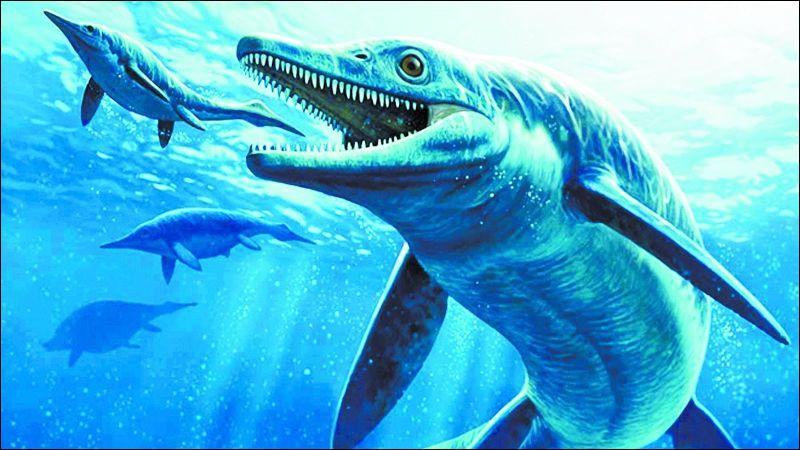 Parmi ces créatures marines, un combat pouvait avoir lieu. Lequel ?