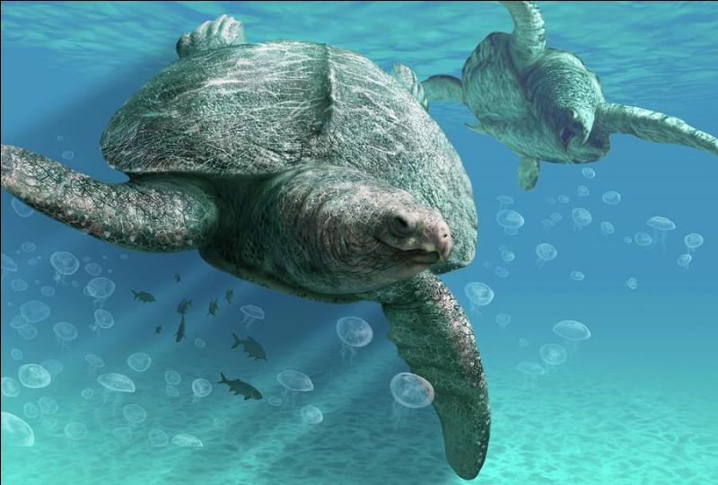 Pareil ici sauf avec une tortue marine. Quel est son nom ?