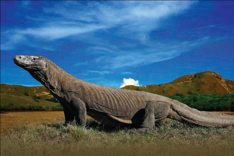 Parlons d'abord des monstres actuels, comment s'appelle ce reptile énorme ?