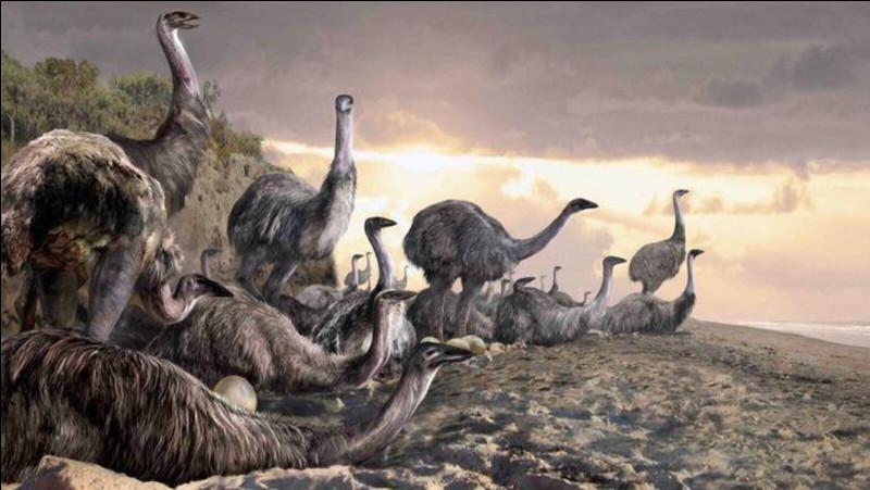 Regardez ces gigantesques oiseaux, comment appelle-t-on leur espèce ?