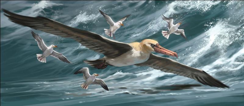 En parlant d'oiseaux, l'oiseau ayant actuellement la plus grande envergure est le condor des Andes. Il se fait détrôner par cet oiseau vivant il y a 25 à 28 millions d'années. Comment s'appelle-t-il ?