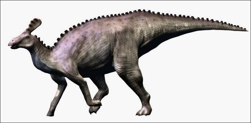 En 1958, il décrit Tsintaosaurus, à l'époque on pensait que ce dinosaure avait une crête :