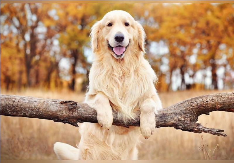 Facile, les chiens, ou Canis lupus familiaris en nom scientifique, sont-ils des canidés ou bien des félins (ou félidés) ?