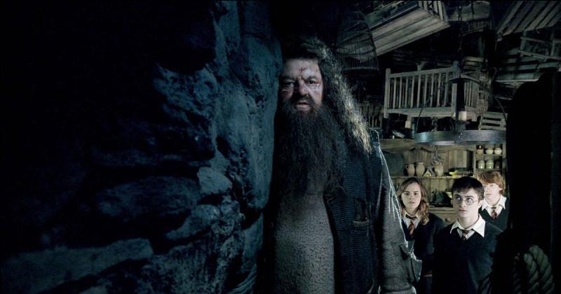 Qu'est-ce que Hagrid demande à Harry, Ron et Hermione ?