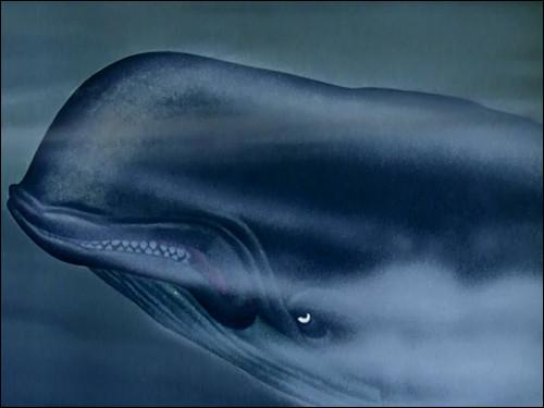 De quel Disney cette baleine est-elle originaire ?