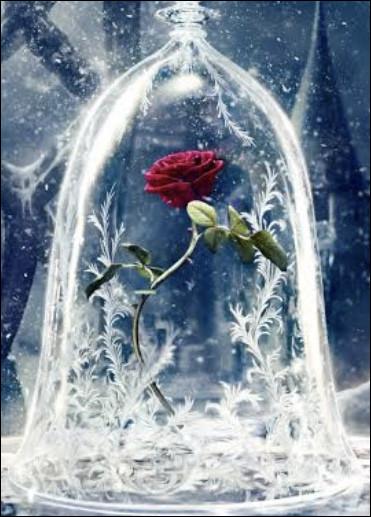 De quel Disney vient cette rose ?