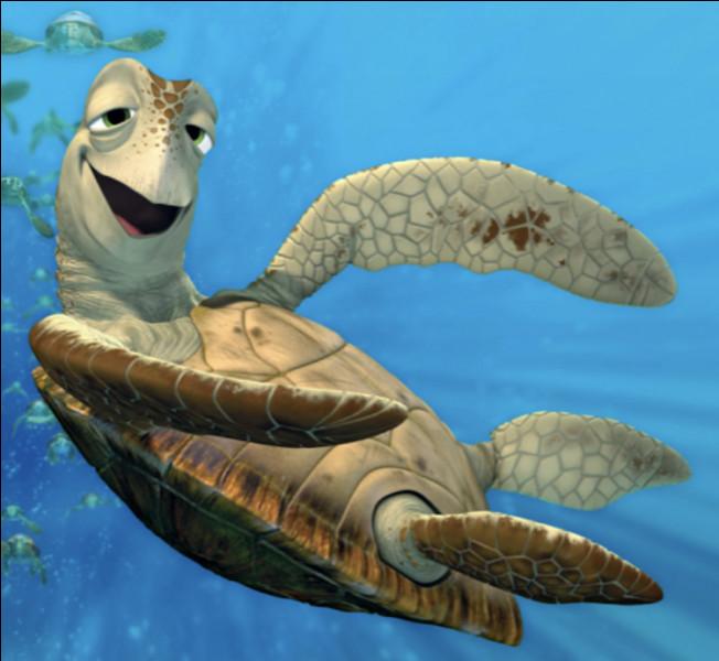 De quel Disney vient cette tortue ?