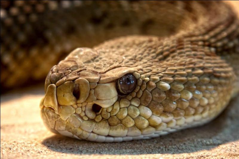 Les serpents sont sourds.