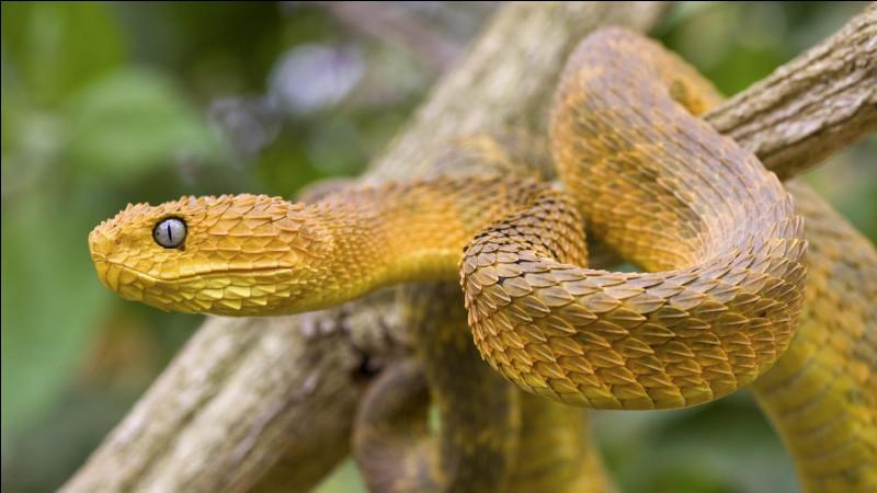 Il existe des serpents avec des tentacules.