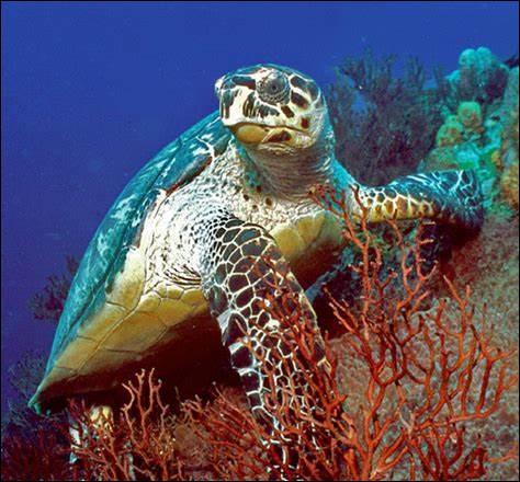 Certaines tortues marines peuvent s'attaquer aux humains sans raison.