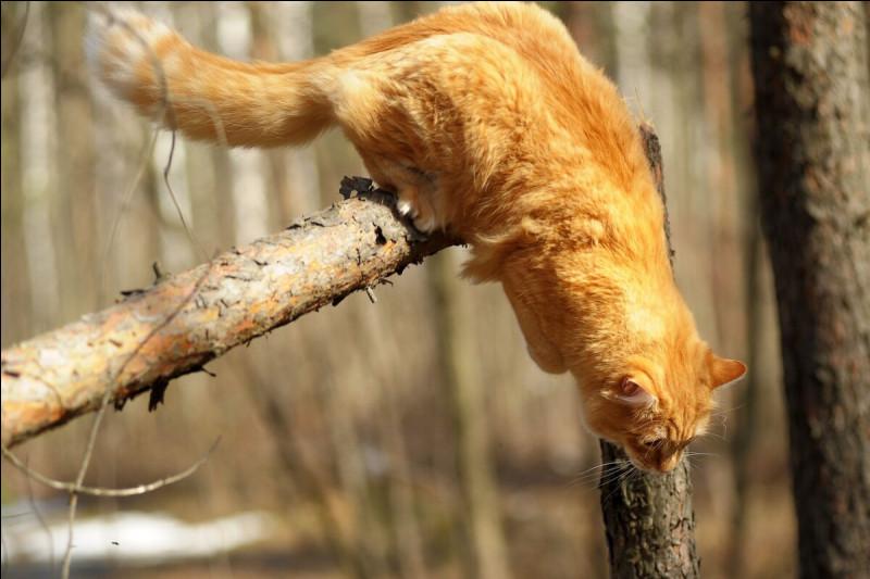 Pour savoir faire toutes ses acrobaties, il a plus de muscles que nous. Combien ?