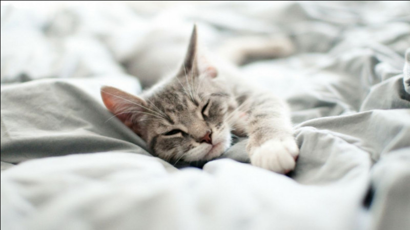 Combien le chat dort-il d'heures en moyenne par jour ?