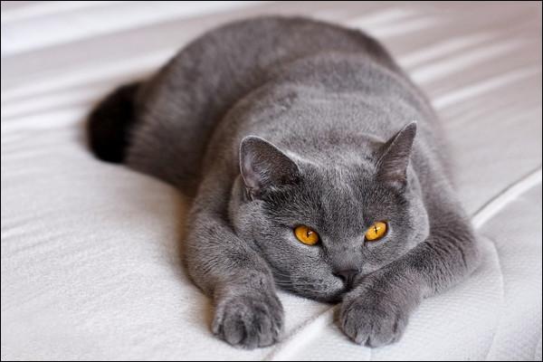 Quel est le poids moyen d'un chat ?